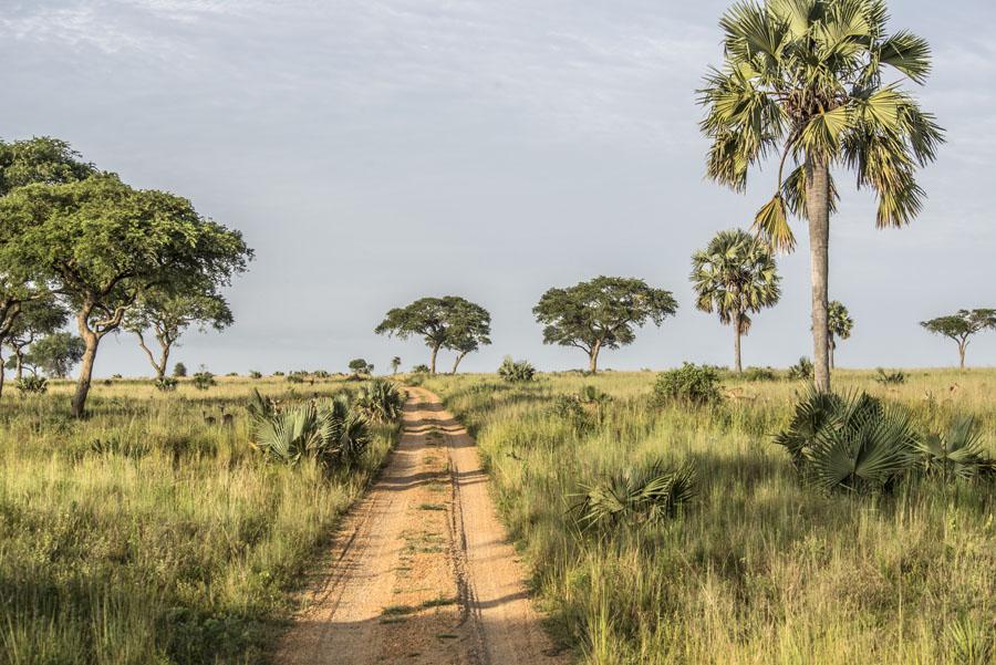 murchison-falls-uganda (41)