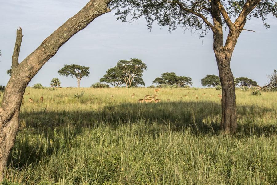 murchison-falls-uganda (42)