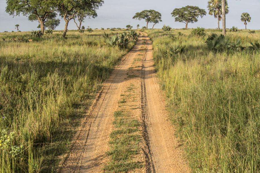 murchison-falls-uganda (43)