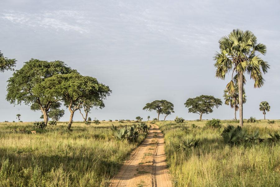 murchison-falls-uganda (44)