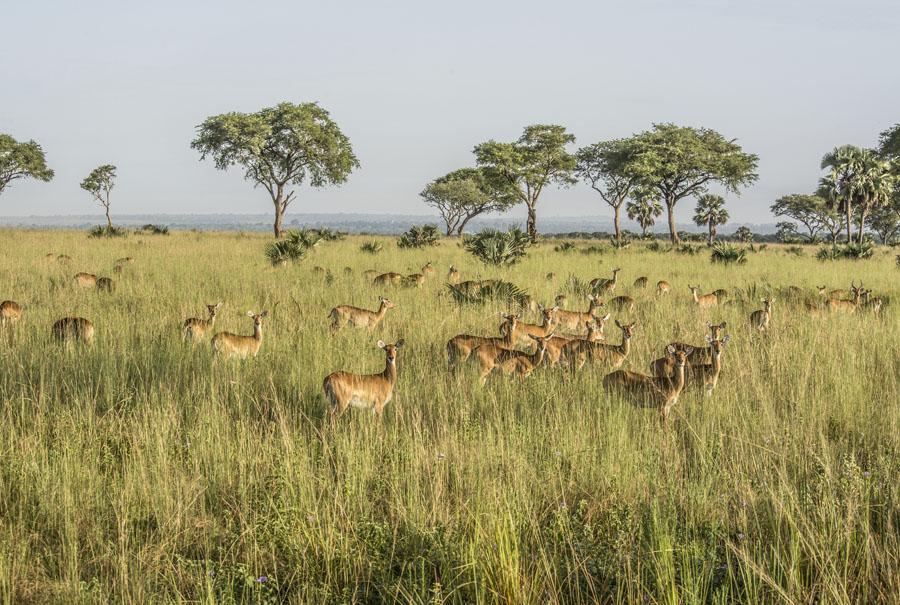 murchison-falls-uganda (46)