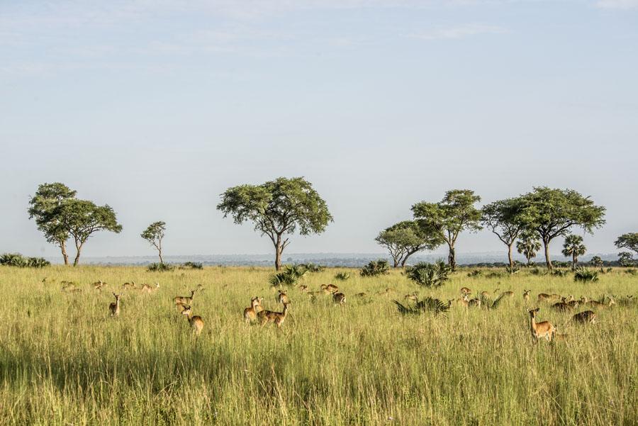 murchison-falls-uganda (49)