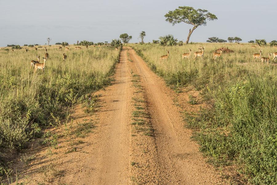 murchison-falls-uganda (51)