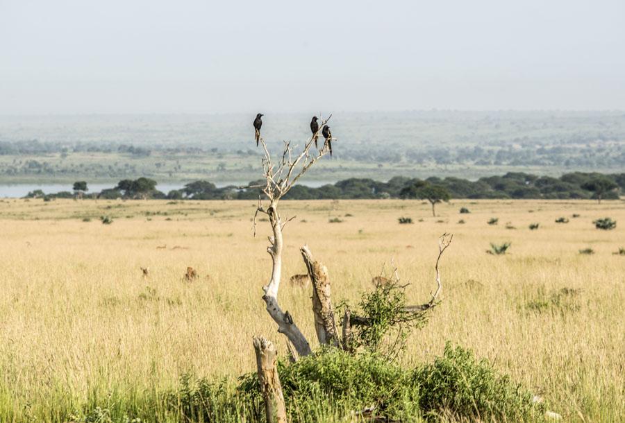 murchison-falls-uganda (57)