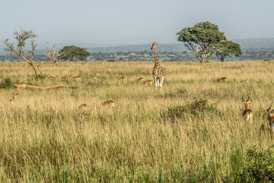 murchison-falls-uganda (60)