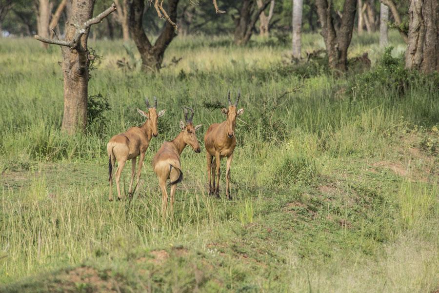 murchison-falls-uganda (72)