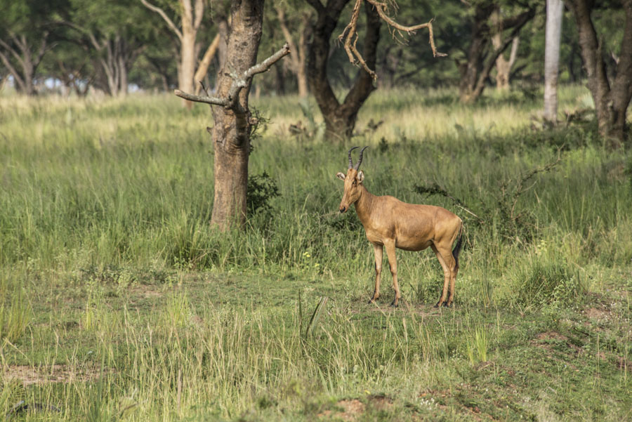 murchison-falls-uganda (73)