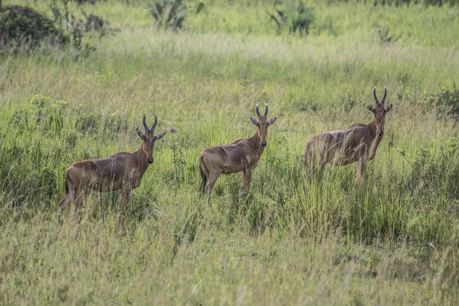 murchison-falls-uganda (75)