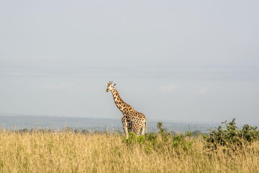 murchison-falls-uganda (80)
