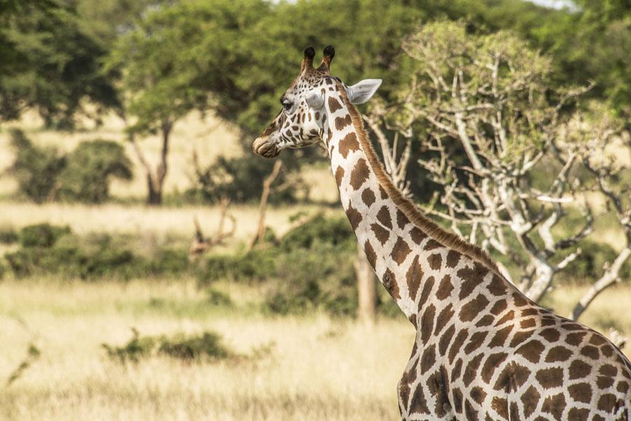 murchison-falls-uganda (89)