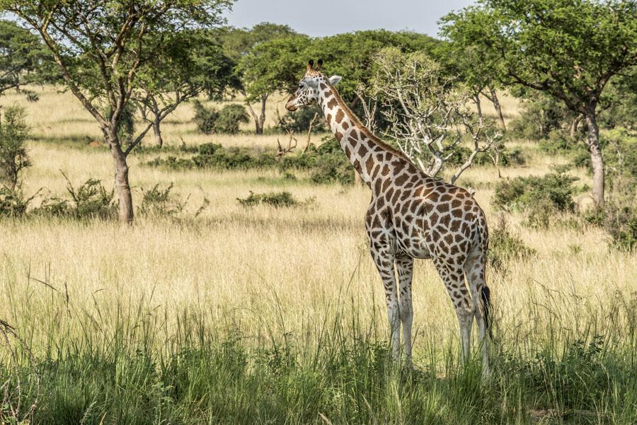 murchison-falls-uganda (90)