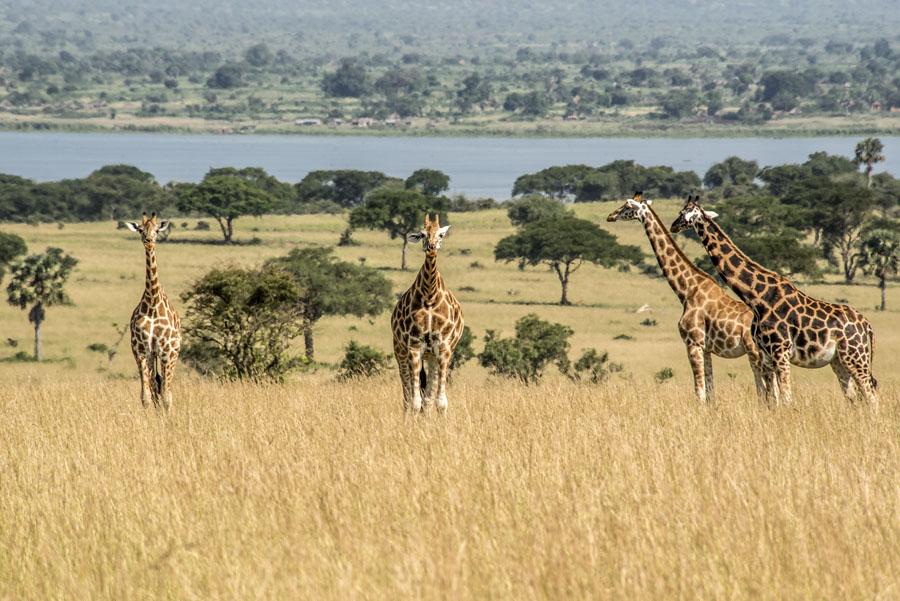 murchison-falls-uganda (97)