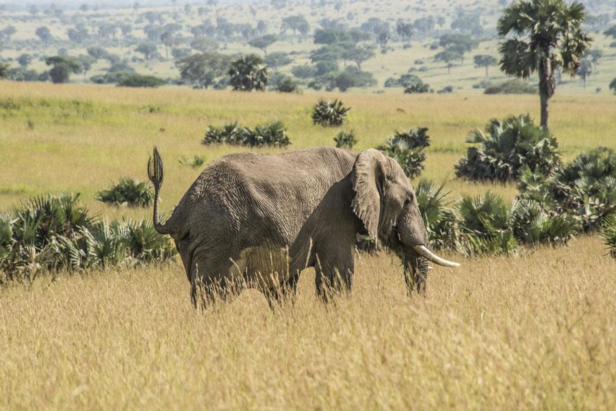 murchison-falls-uganda (98)