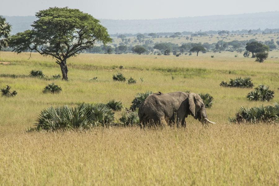 murchison-falls-uganda (99)