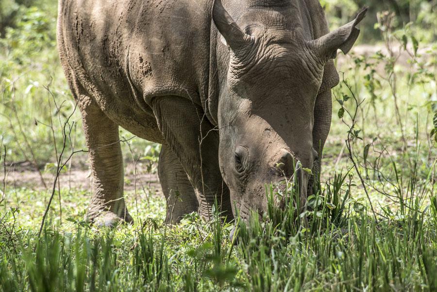ziwa-rhino-sanctuary-uganda (10)