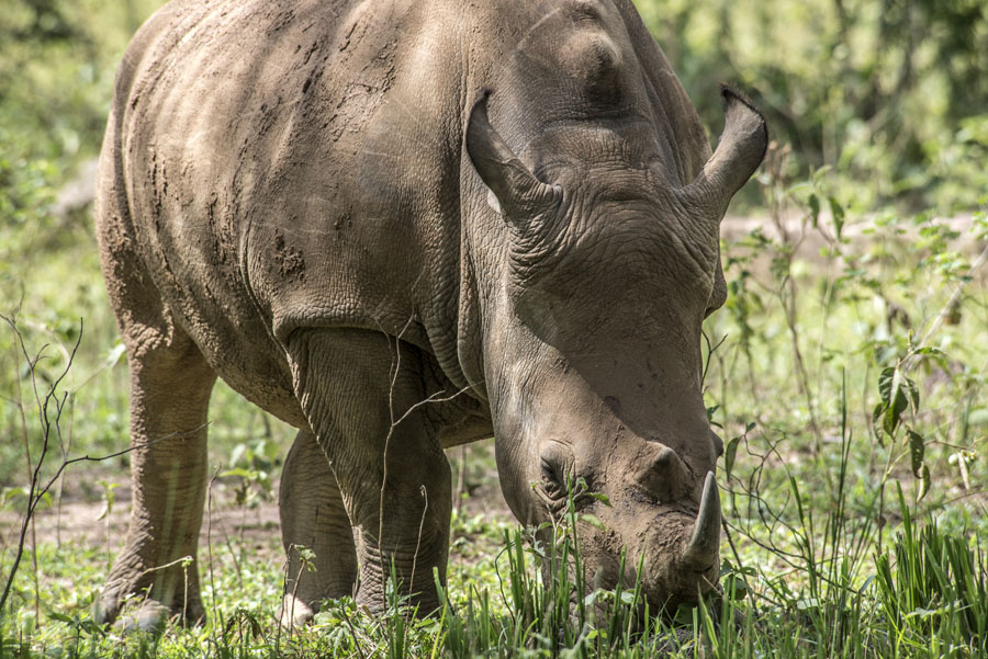 ziwa-rhino-sanctuary-uganda (11)
