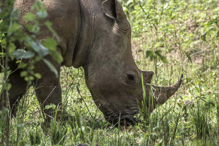 ziwa-rhino-sanctuary-uganda (12)