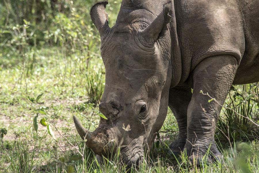 ziwa-rhino-sanctuary-uganda (13)