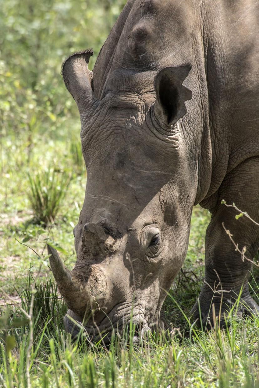 ziwa-rhino-sanctuary-uganda (14)