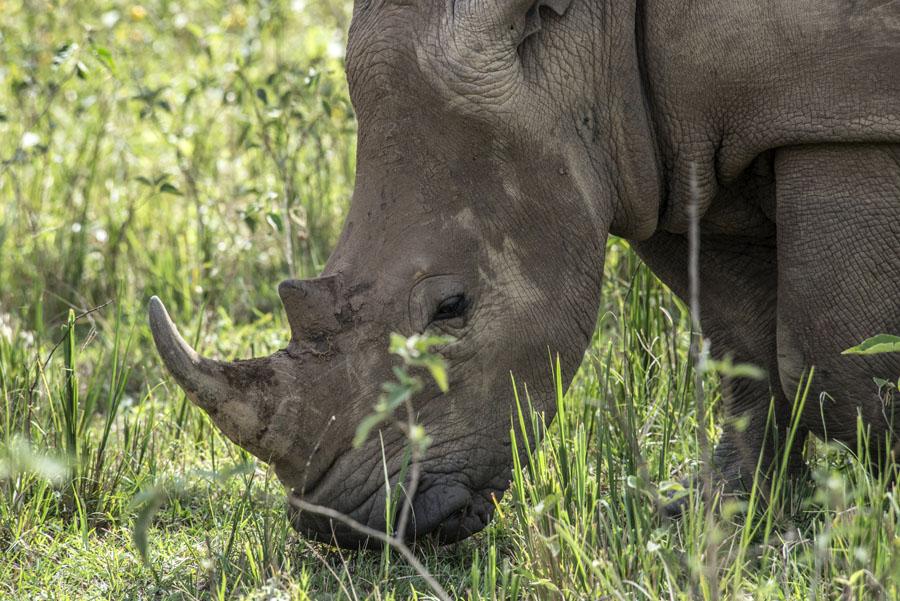 ziwa-rhino-sanctuary-uganda (15)