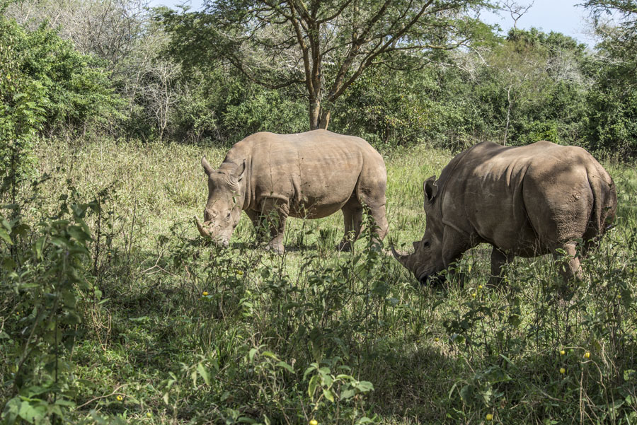 ziwa-rhino-sanctuary-uganda (16)