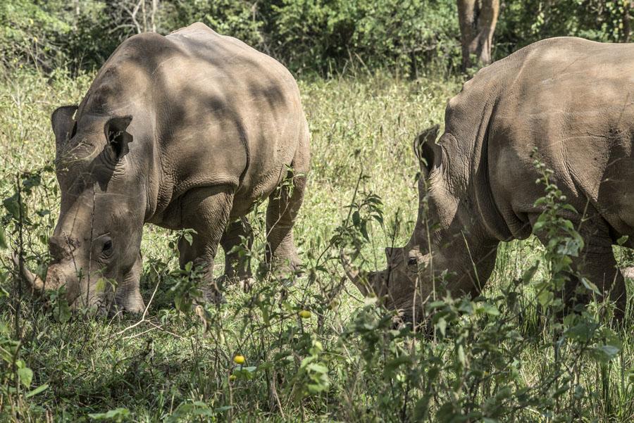 ziwa-rhino-sanctuary-uganda (17)