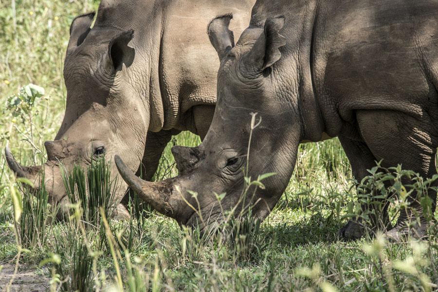 ziwa-rhino-sanctuary-uganda (18)