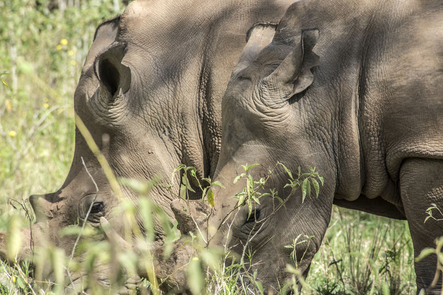ziwa-rhino-sanctuary-uganda (19)