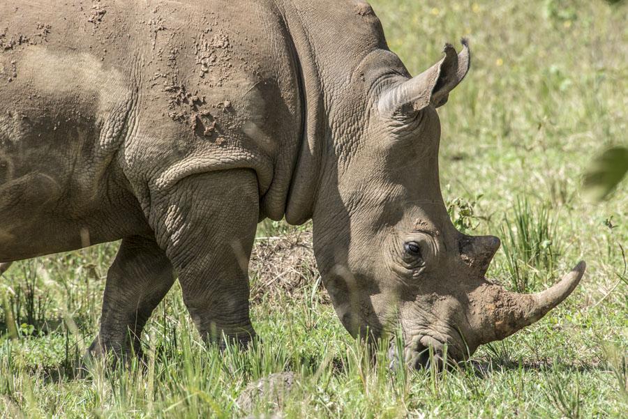 ziwa-rhino-sanctuary-uganda (21)