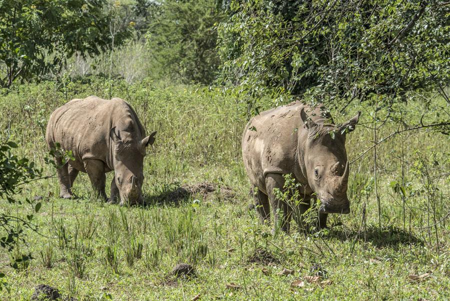 ziwa-rhino-sanctuary-uganda (22)