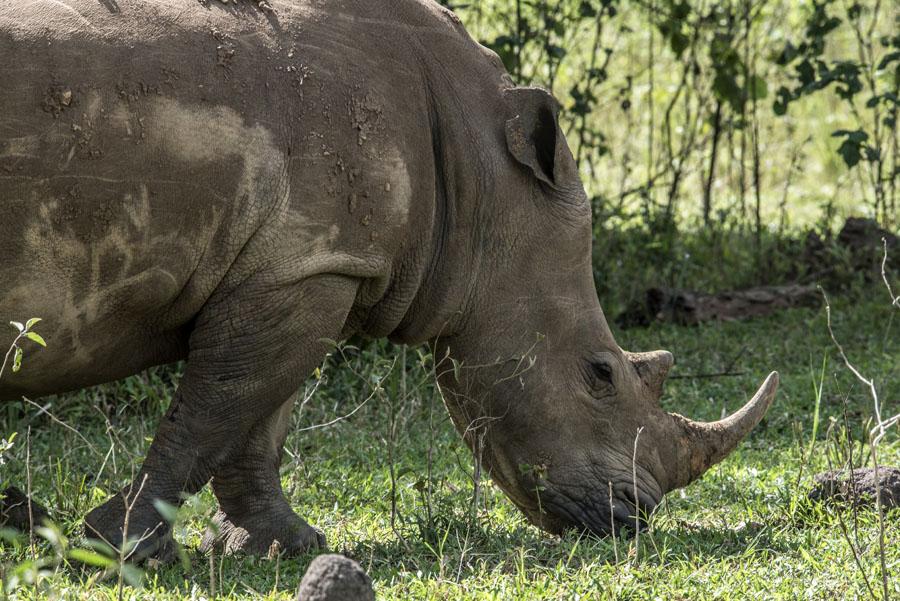 ziwa-rhino-sanctuary-uganda (23)