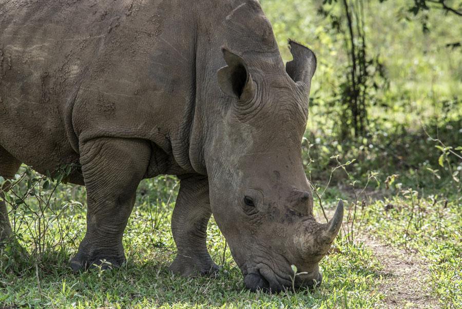 ziwa-rhino-sanctuary-uganda (25)