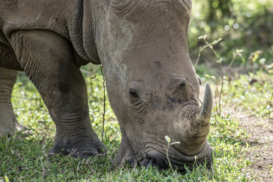 ziwa-rhino-sanctuary-uganda (26)