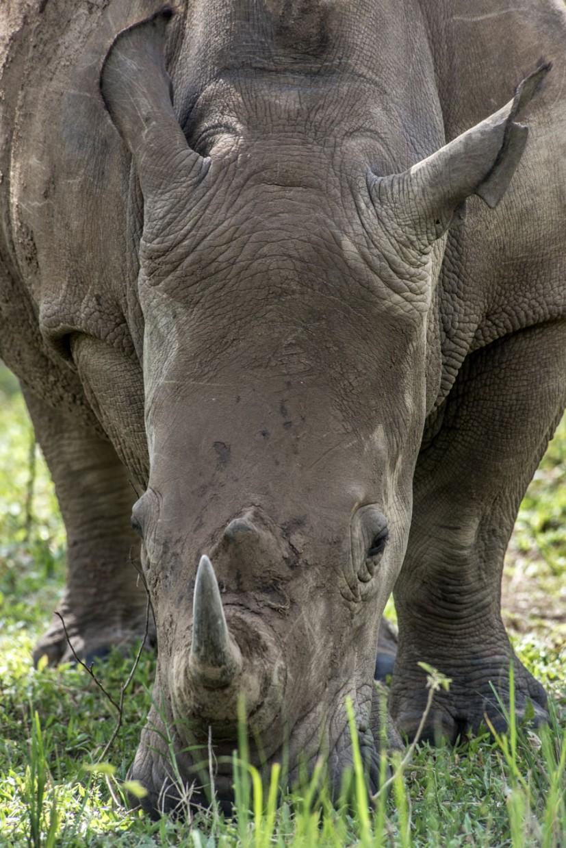 ziwa-rhino-sanctuary-uganda (27)