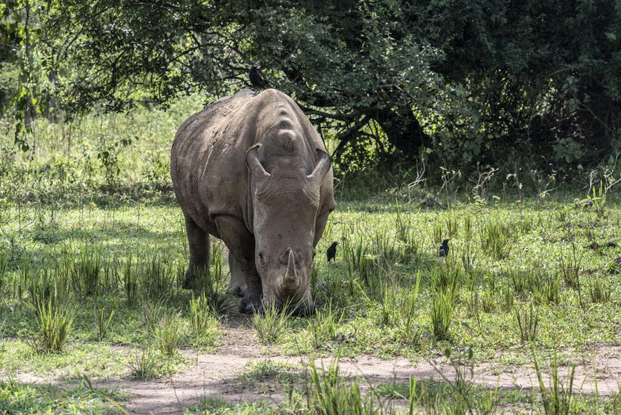 ziwa-rhino-sanctuary-uganda (28)