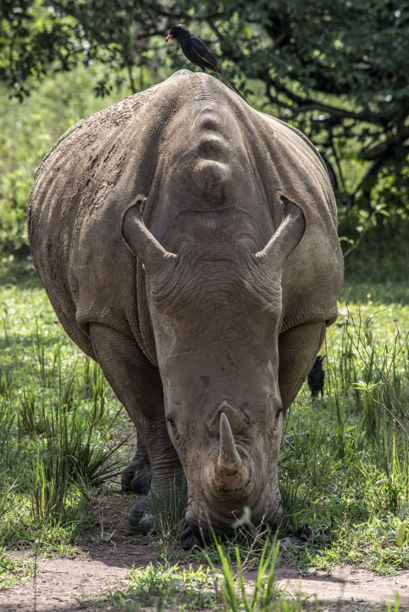ziwa-rhino-sanctuary-uganda (29)