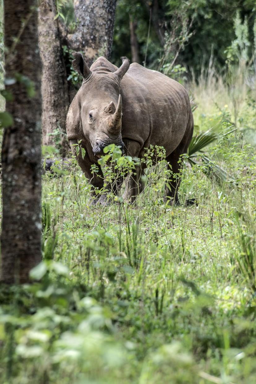 ziwa-rhino-sanctuary-uganda (3)