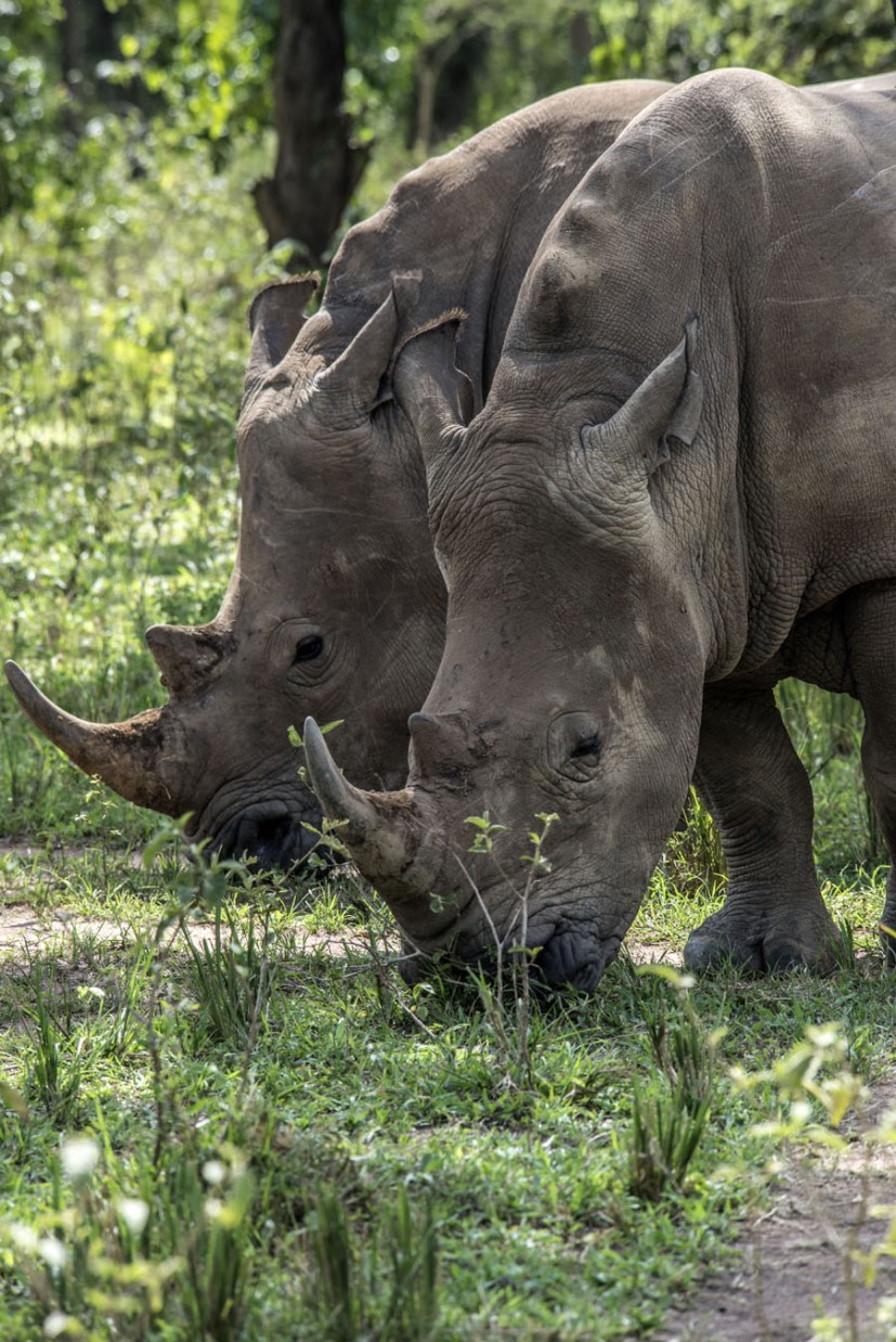 ziwa-rhino-sanctuary-uganda (30)