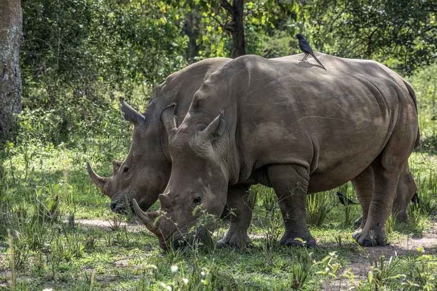 ziwa-rhino-sanctuary-uganda (31)