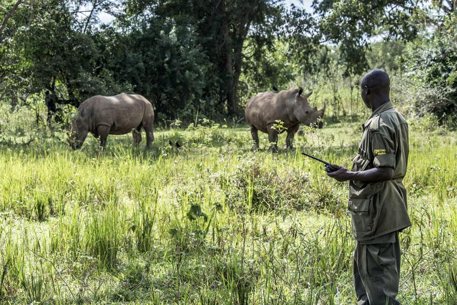ziwa-rhino-sanctuary-uganda (32)