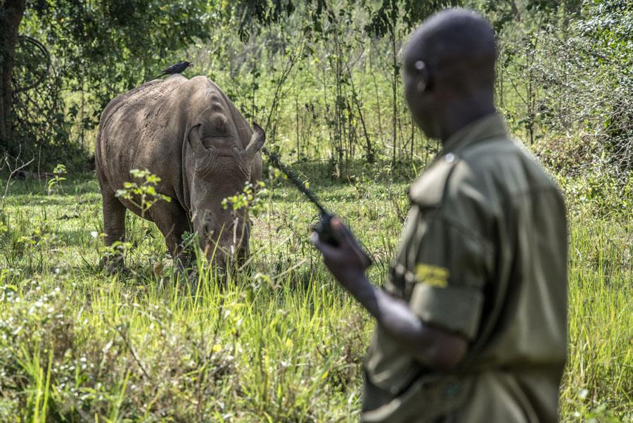 ziwa-rhino-sanctuary-uganda (33)