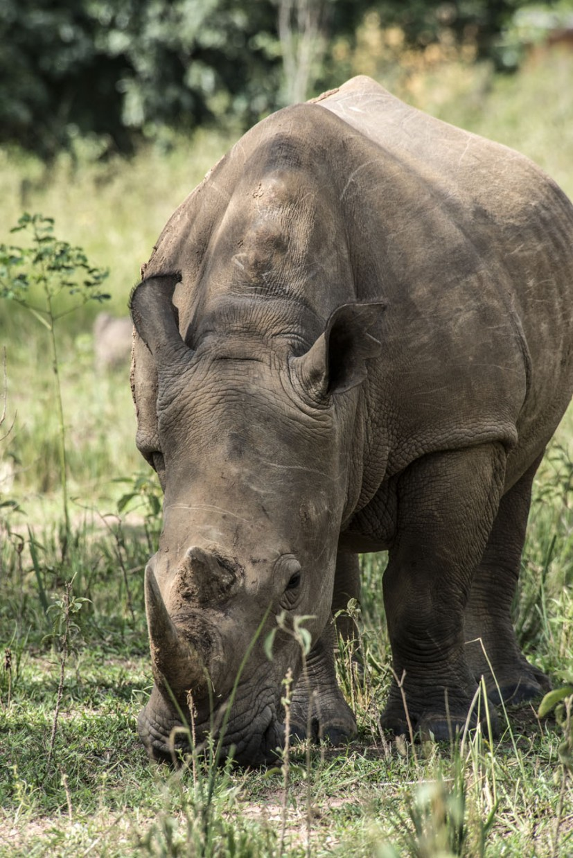 ziwa-rhino-sanctuary-uganda (34)