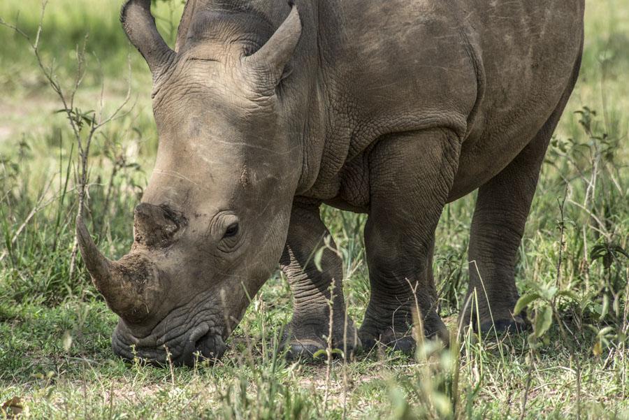 ziwa-rhino-sanctuary-uganda (35)
