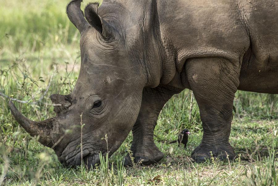 ziwa-rhino-sanctuary-uganda (36)