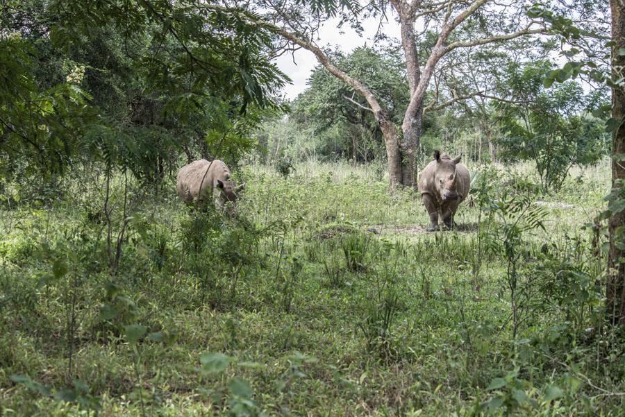 ziwa-rhino-sanctuary-uganda (4)