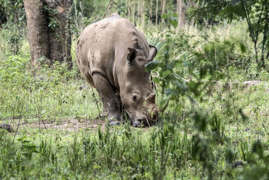 ziwa-rhino-sanctuary-uganda (5)