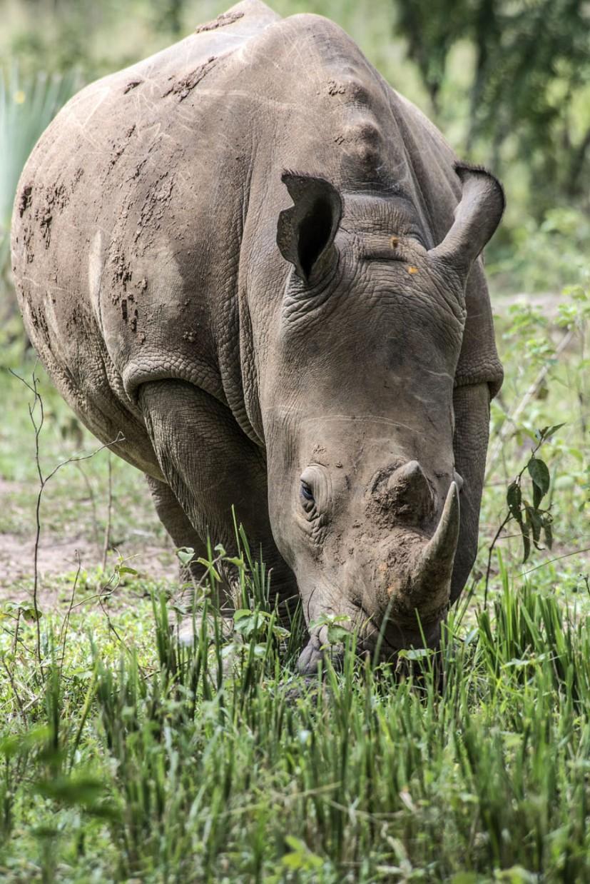 ziwa-rhino-sanctuary-uganda (6)