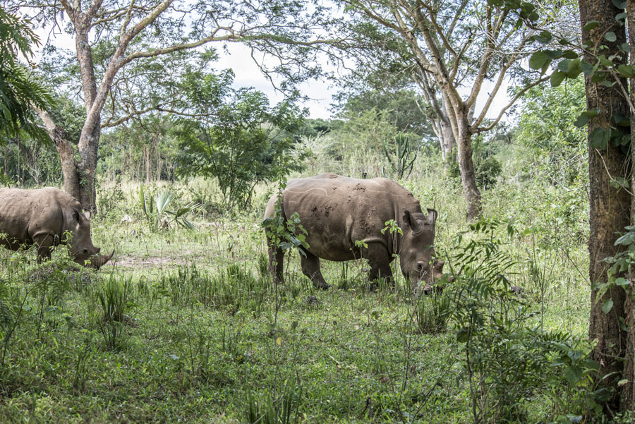 ziwa-rhino-sanctuary-uganda (7)