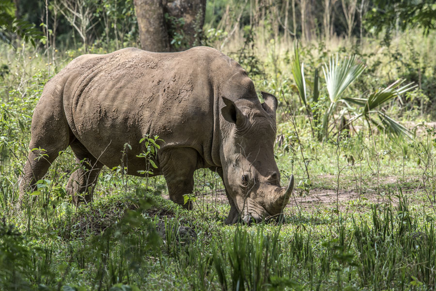 ziwa-rhino-sanctuary-uganda (8)