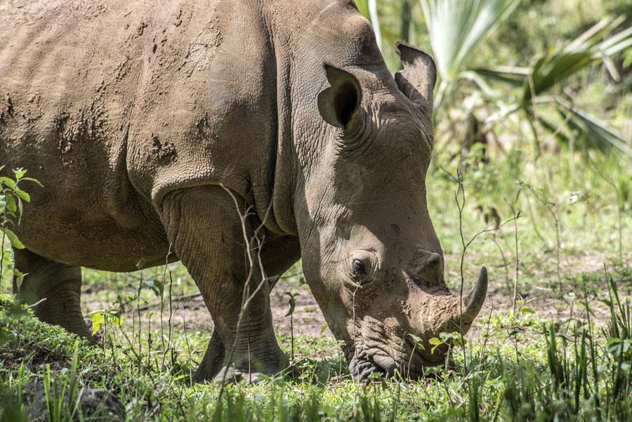 ziwa-rhino-sanctuary-uganda (9)
